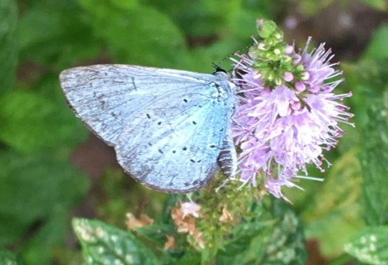 Butterflies and Moths of Sussex