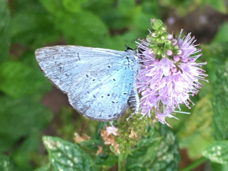 Butterflies and Moths of Sussex | Sue Craig