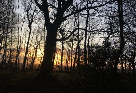 Trees at Stanmer