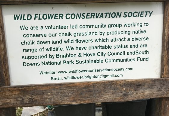 Wild Flower project in Stanmer Park