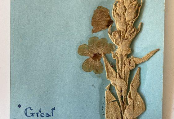 Charlie Yeates' Girls - The Wildflower Archive